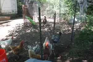 Blending flocks-3