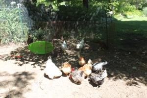 Blending flocks-2