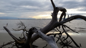 Sunset on Driftwood Beach, Jekyll Island, GA.
